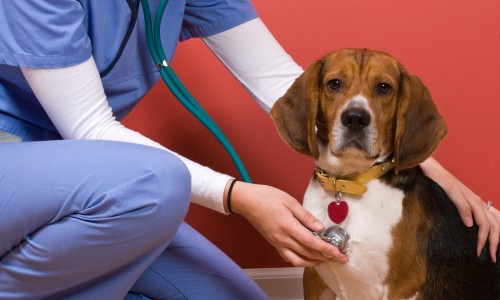 484280-vet-checkup