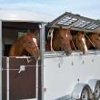 Hästtransport