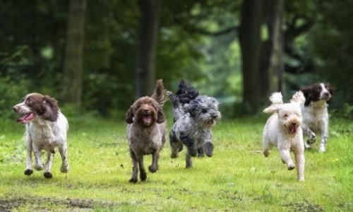 Hundar i det fria