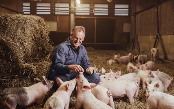 Knorr på svansen i grisnäringen