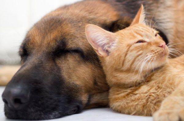 Forskning om hund- och katthälsa får 4,6 miljoner