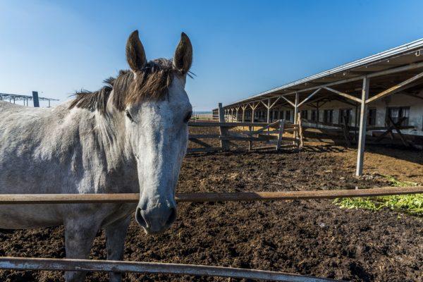 Hästar värre miljöbovar än kor