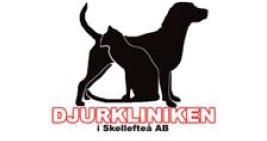 Djurkliniken i Skellefteå söker en smådjursintresserad veterinär i Västerbottens län