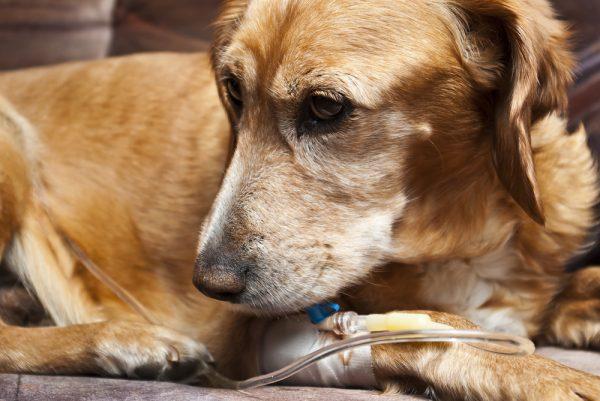 Oasmia flyttar veterinärdelen till USA