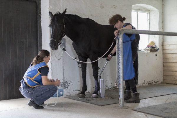 Lättare ta röntgen till hästen än tvärtom