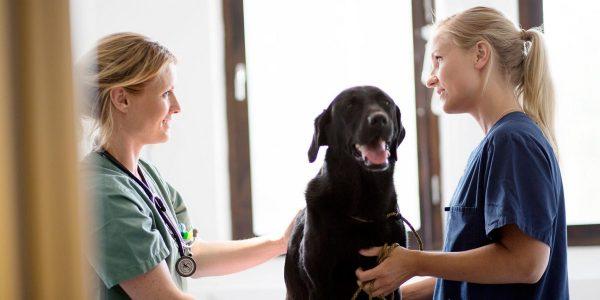 Bättre möjlighet att behandla cancer hos hundar