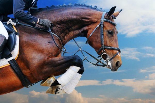 Avtal ska bidra till bättre hästhälsa