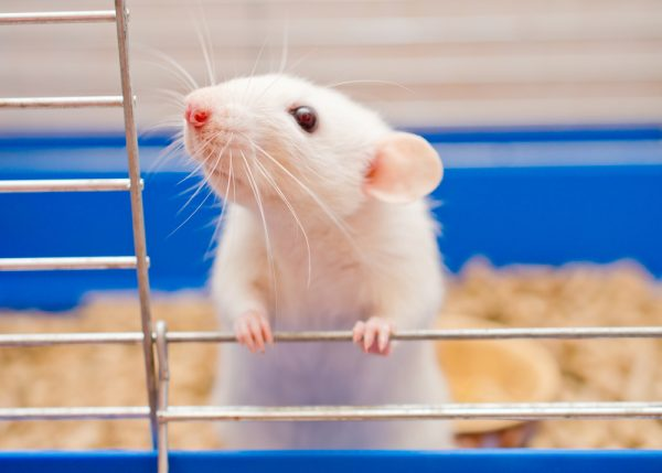 Bidrag till forskning utan försöksdjur