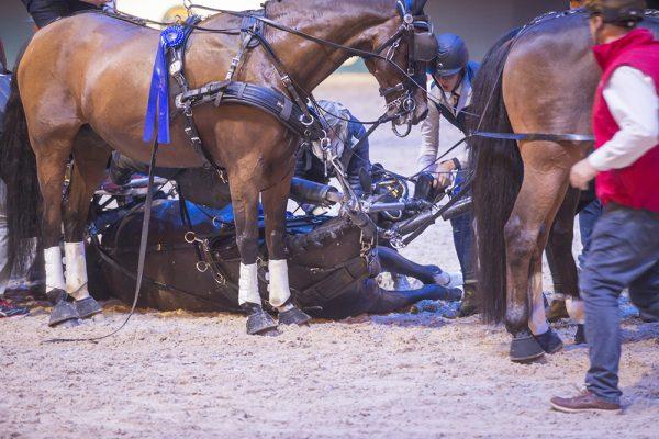 Hästen dog på Friends arena