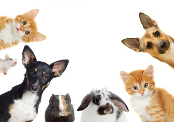Sällskapsdjur i mer än vart tredje hushåll