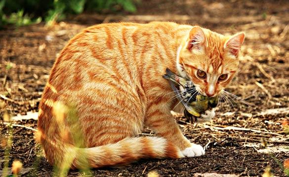 Många fall av salmonella hos katt
