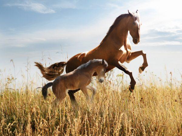 Stiftelsen Hästforskning delar ut 19 Mkr