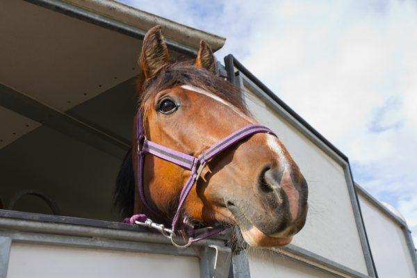 Transportera hästen på rätt sätt