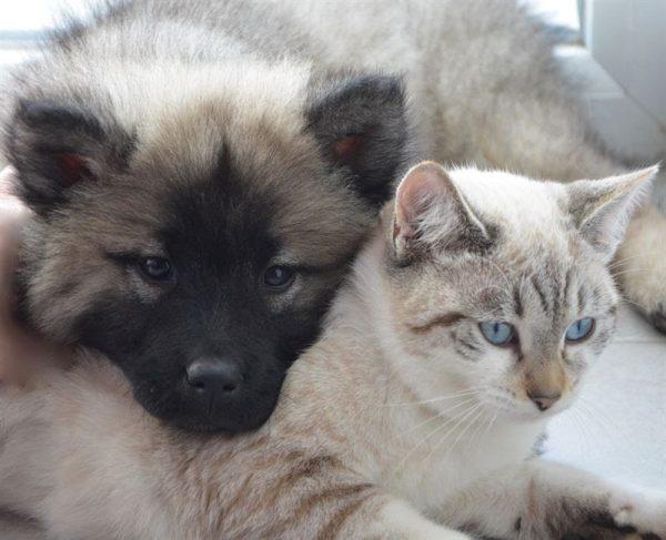 Miljoner till forskning på sällskapsdjur