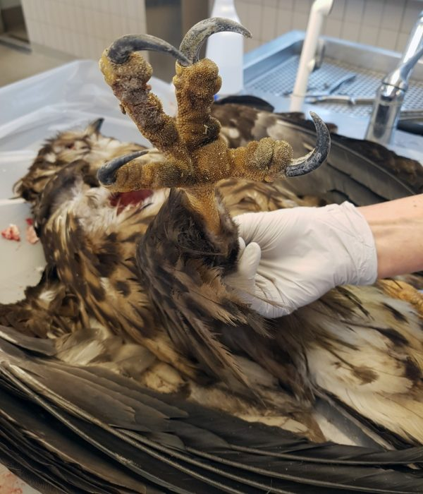 Ny typ av fågelinfluensa konstaterad i Sverige