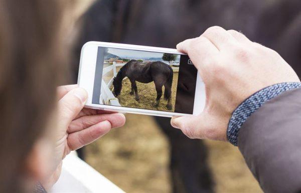 Agria och FirstVet utökar med hästrådgivning