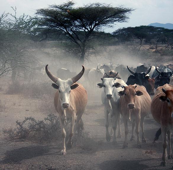 Svensk livsmedelssäkerhet sprids till Östafrika