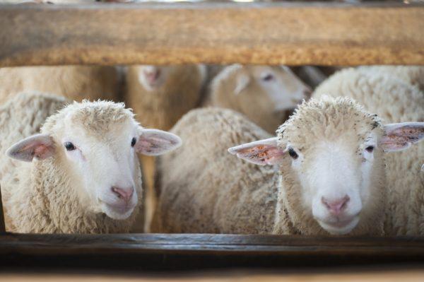 Länsstyrelserna upphandlar inför förändringar i djurskyddet