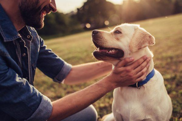 Nya markörer för autoimmun sjukdom hos hund