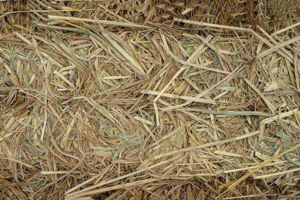 Varning för svinpest i importerat grovfoder