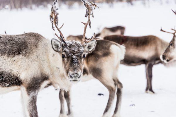 Stora vilda djur kan motverka klimathotet