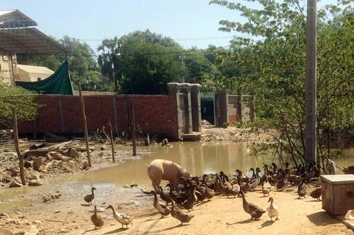 Okunskap sprider antibiotikaresistens i Kambodja