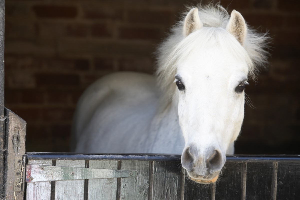 Stort utbrott av misstänkt botulism på häst i Skåne