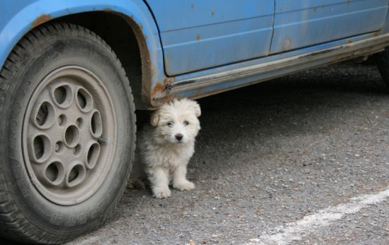 Fler hundar skadas i trafiken
