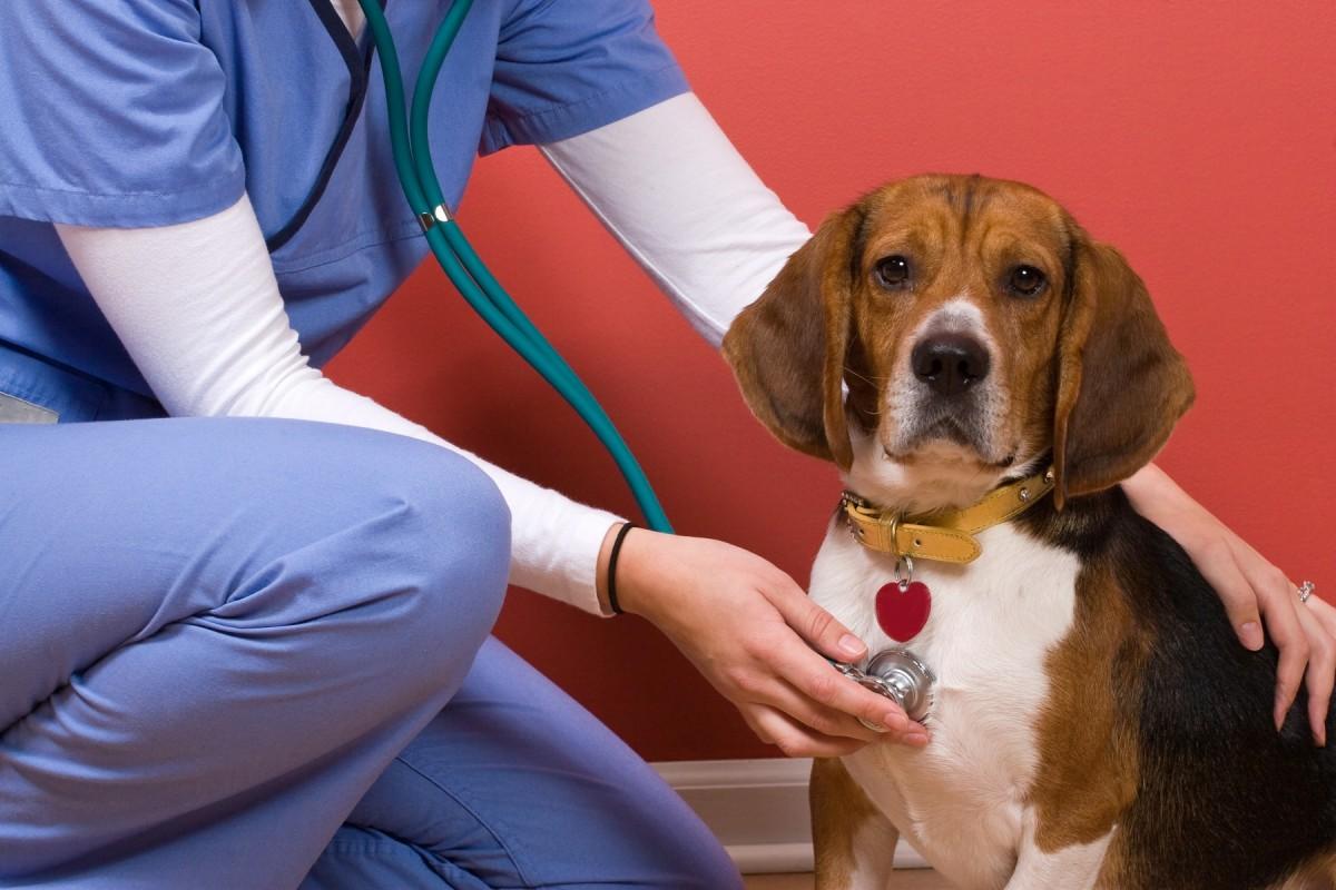 Premieinkomsterna för djurförsäkringar stiger