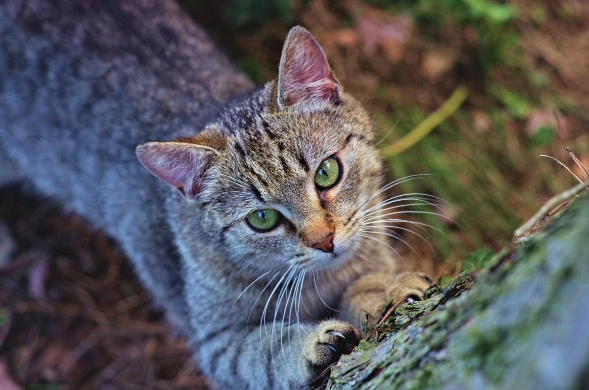 Katter: Agria har kartlagt de vanligaste diagnoserna