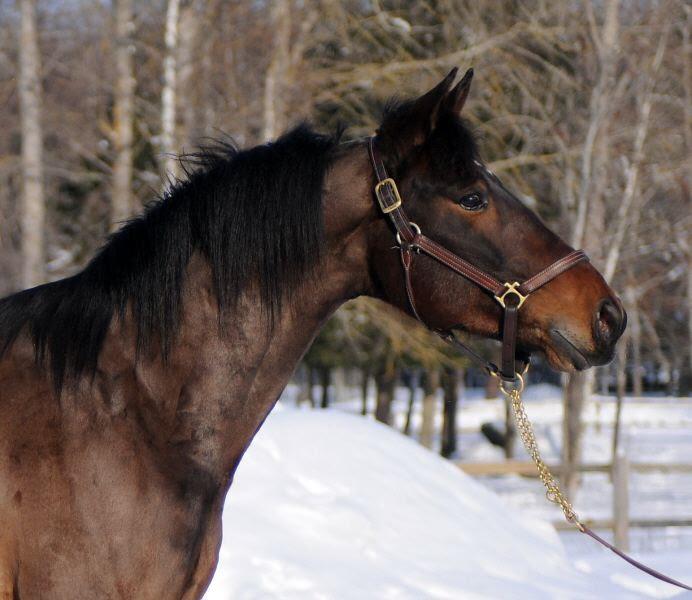 Agria satsar på häst