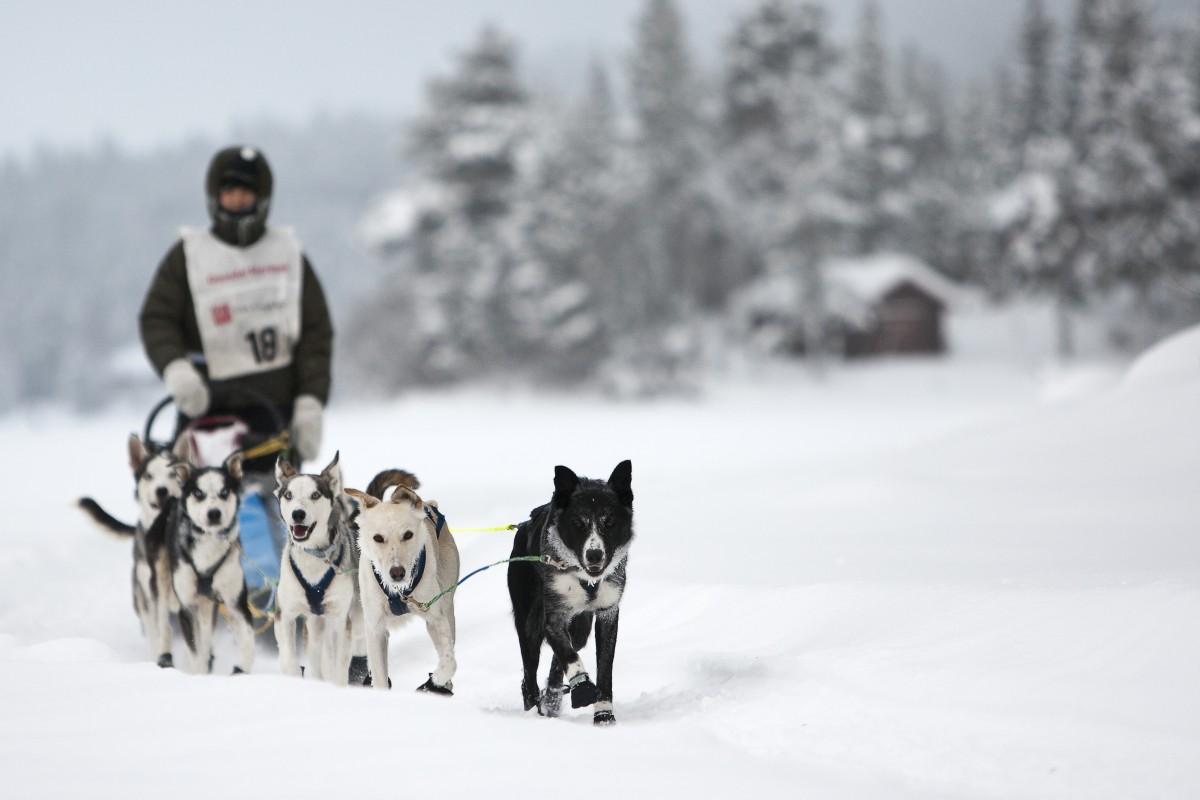 På nytt jobb: Andreas varvar veterinärjobb och hundspann