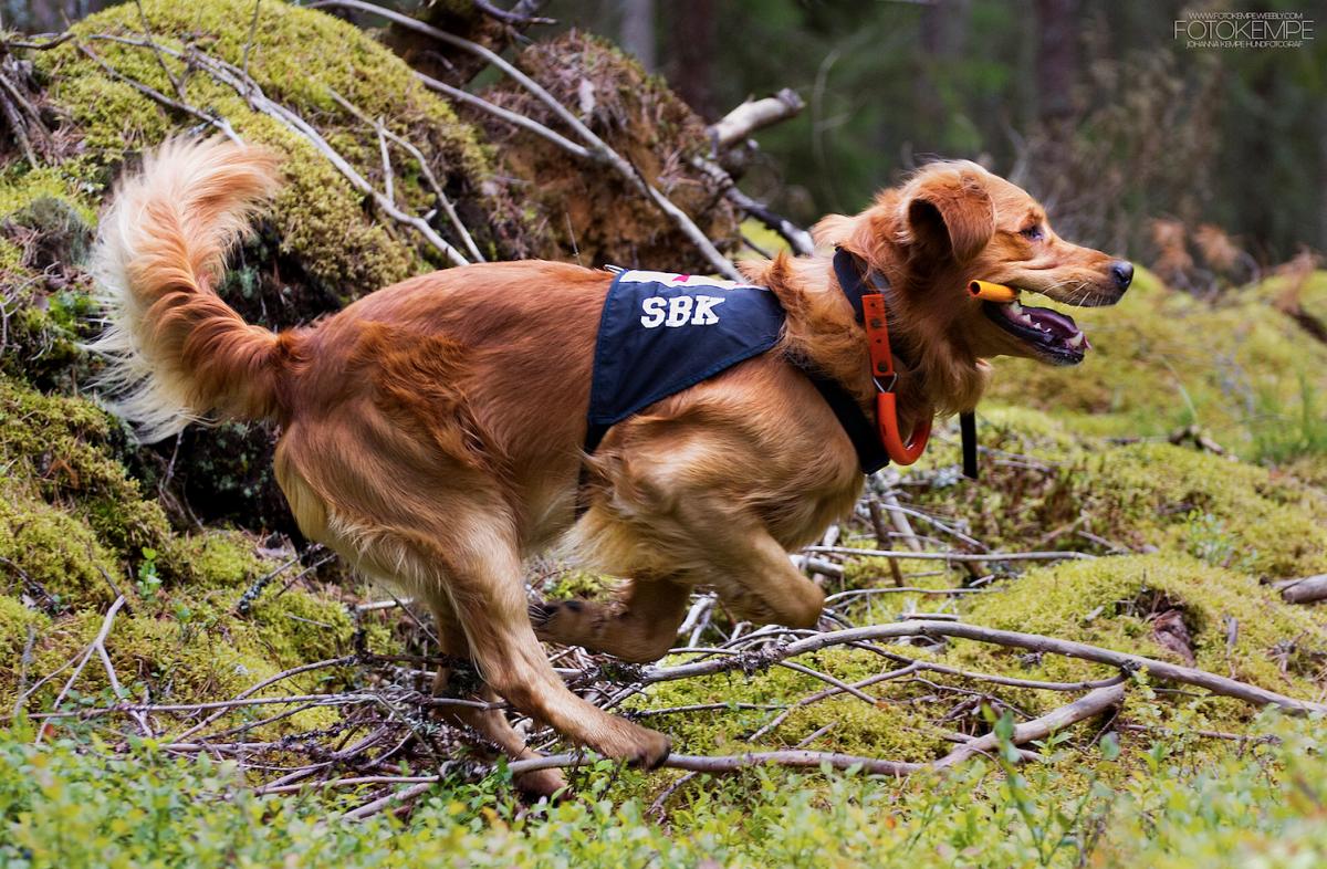 Stort hundevent i Göteborg i oktober