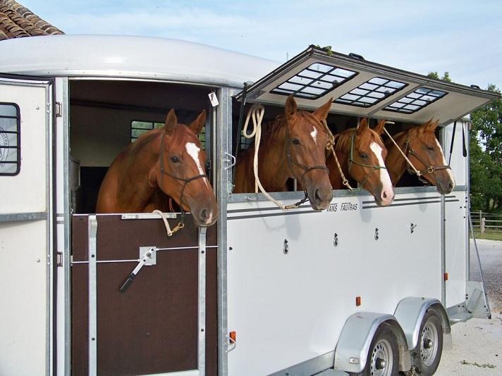 Nya EU-riktlinjer för hästtransporter