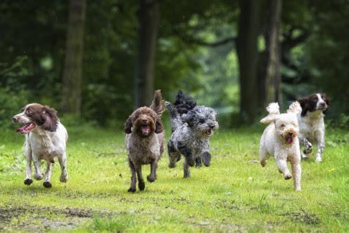 Allt fler hundar har rehabförsäkring