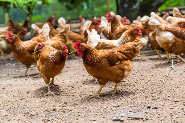 Nytt fall av fågelinfluensa i Stockholms skärgård