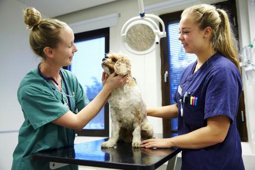 Snabbspår för nyanlända veterinärer