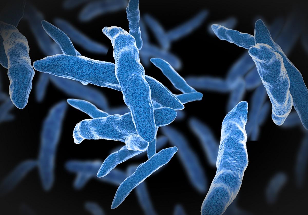 Mer tuberkulos med modern djurhållning