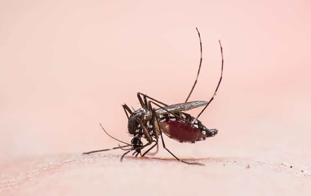 Samordnad kamp mot myggor och fästingar