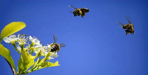 Internationell mässa om bin i Malmö