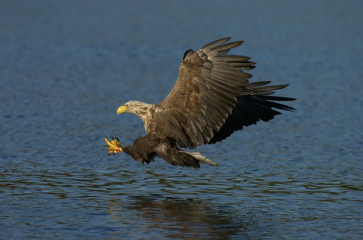 Ogrundade forskarlarm kan ge negativ syn på vilda djur
