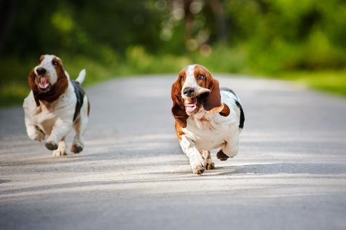 Allt fler hundar skadas i trafiken