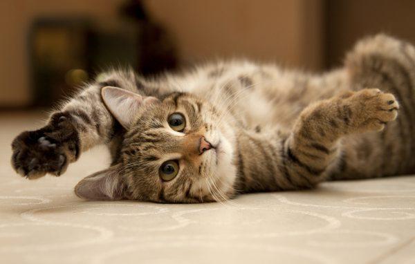 Bozita återkallar torrfoder för katter