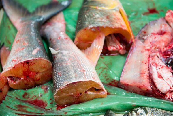 Oklart hur fiskar upplever slakt