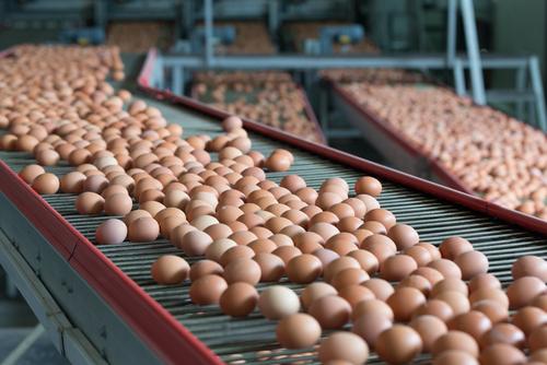 Rester av fipronil funna i ägg i Sverige
