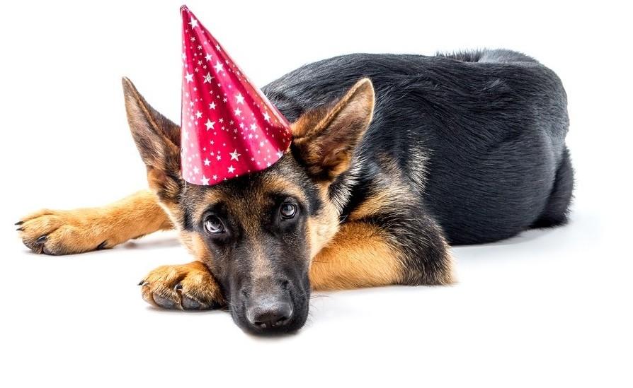 Första veterinärmedlet mot nyårsångest godkänt av EMA