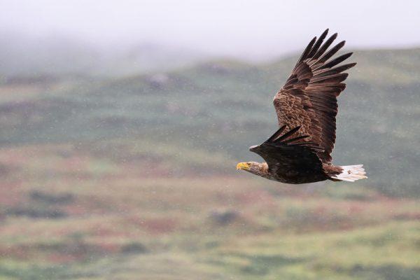 Fågelinfluensa upptäckt på fler vilda fåglar
