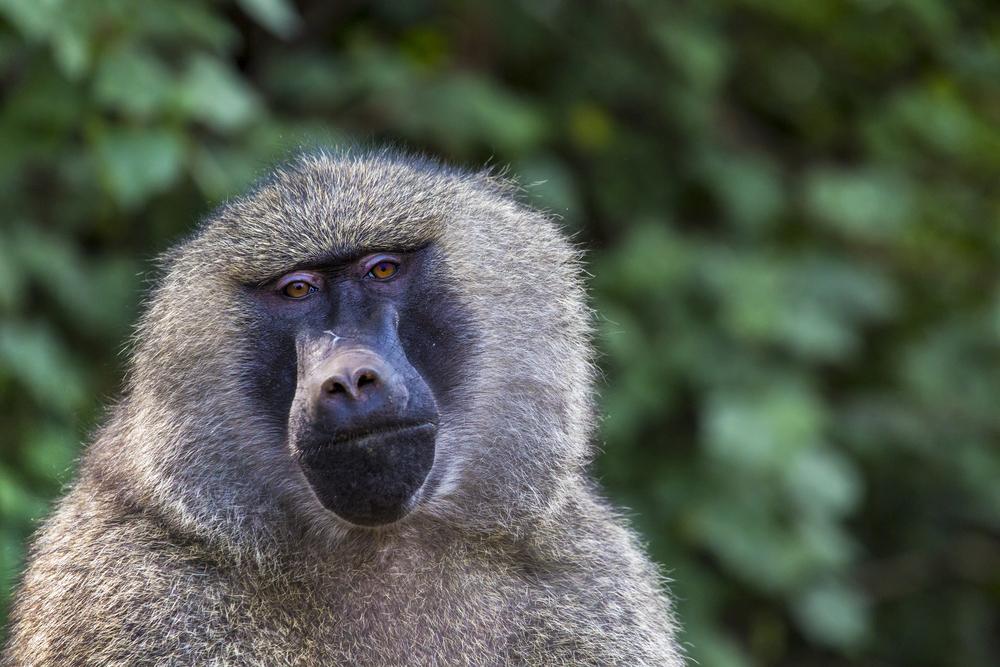 Människosmittor hotar vilda djur