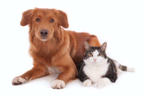 Ica börjar sälja Svedeas djurförsäkring