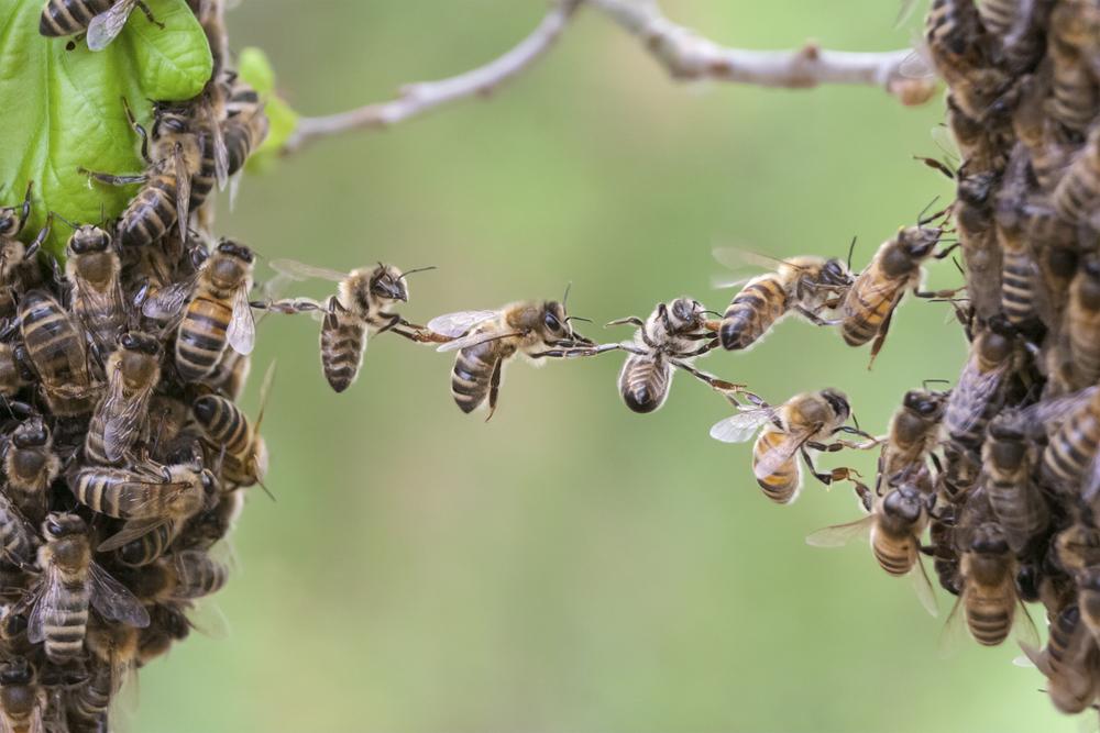 Bekräftat: Vilda bin påverkas av neonikotinoider
